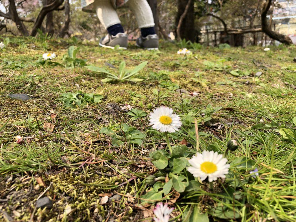 なんだかわからない白いかわいい花。