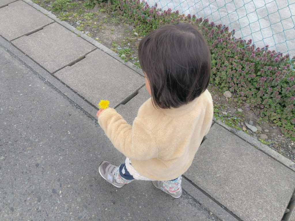 娘と散歩。たんぽぽを摘んで。