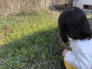 道端のお花。オオイヌノフグリ。小さい花が可愛らしい。
