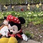 ミニーマウスとおさるさん。春のお花と一緒に。